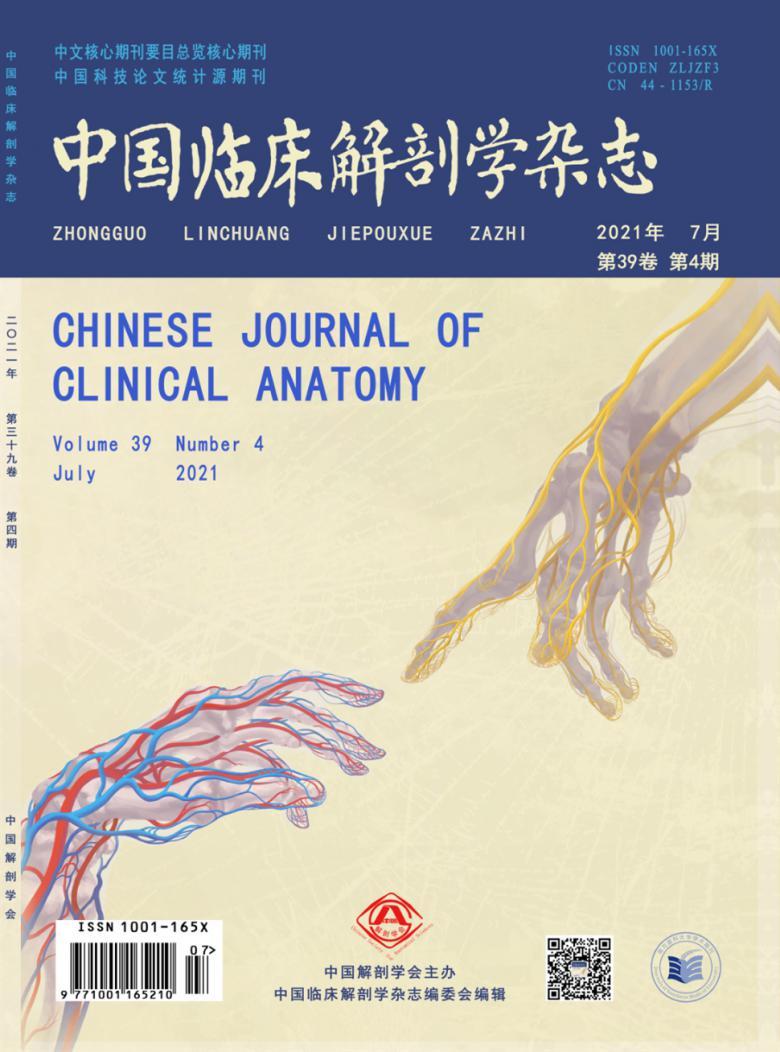 中国临床解剖学杂志
